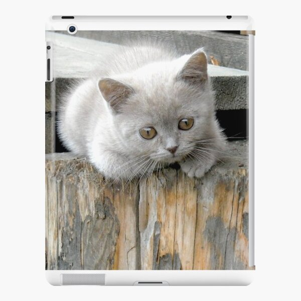 British cat iPad Snap Case