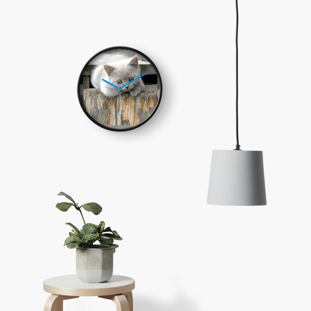 British cat Clock