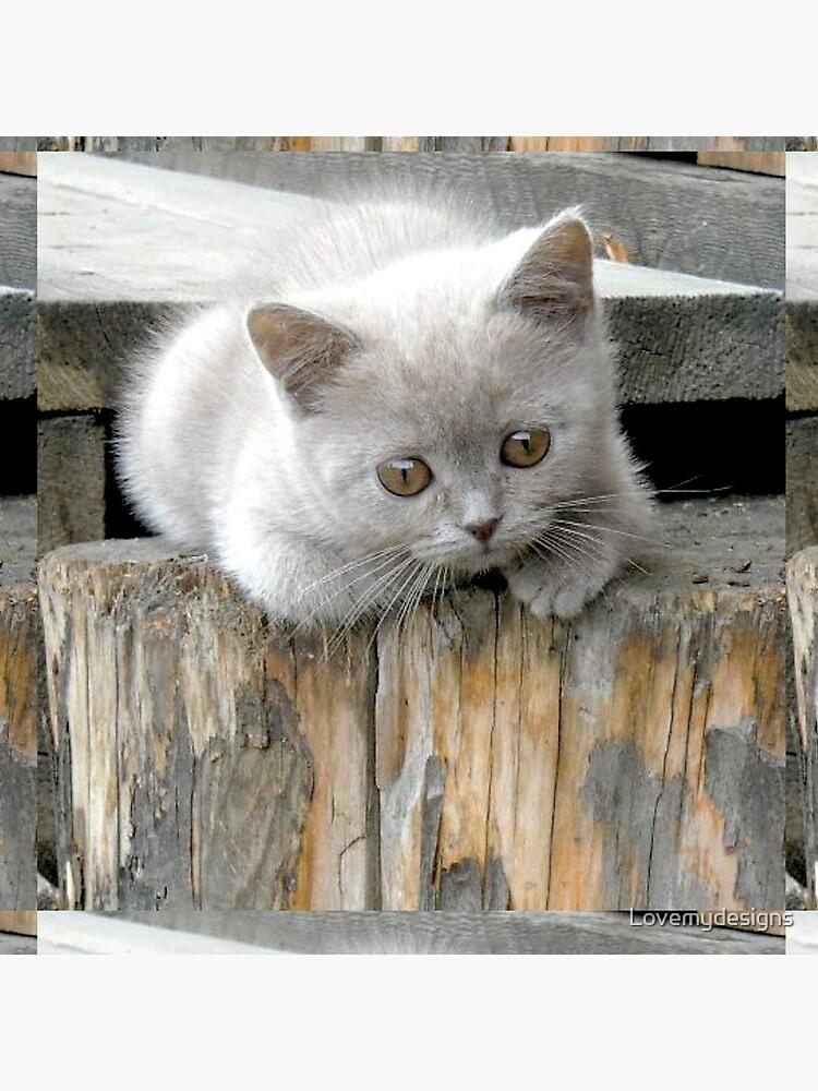 British cat by Lovemydesigns