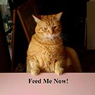 "Feed Me Now by Belinda ""BillyLee"" NYE (Printmaker)"