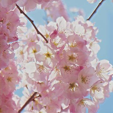 DC Blossom by dangtianwan678
