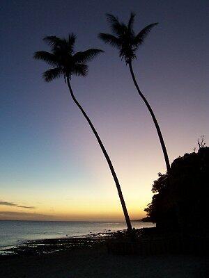 sunsetting palms by toni01