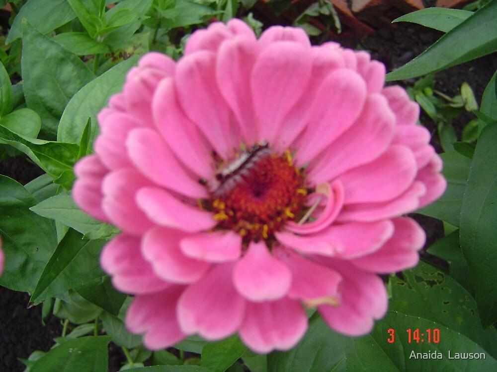 Flower by Anaida  Lawson