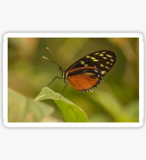 Heliconius Hecale Butterly Sticker