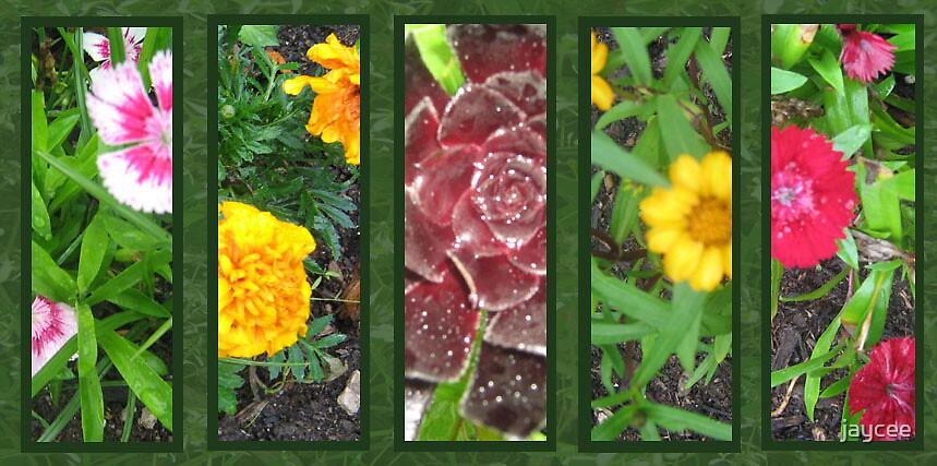 Garden of 5 by jaycee