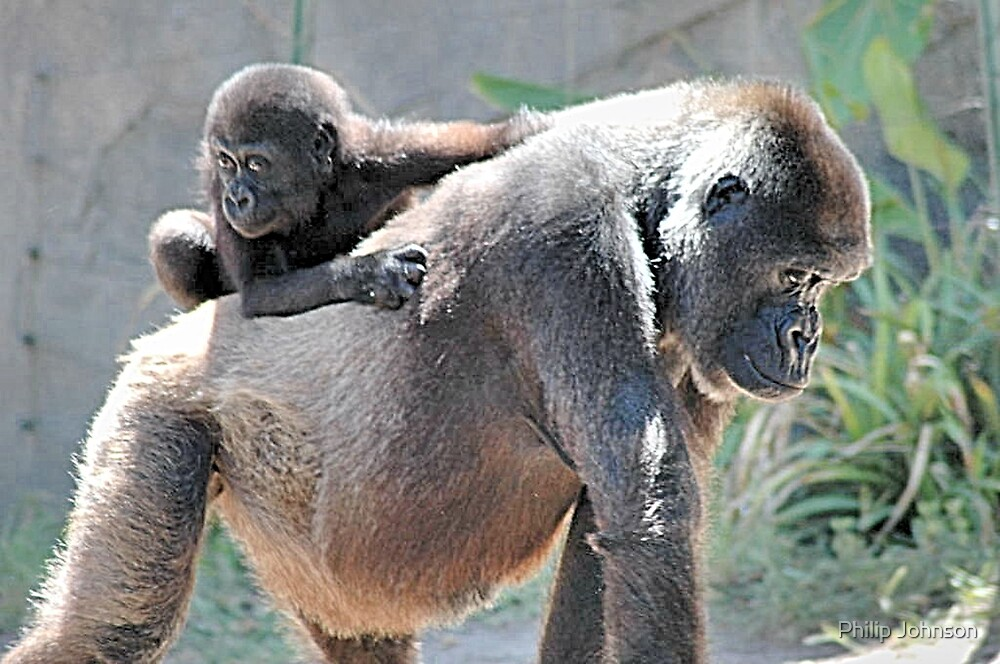 He Ain't Heavy He's My Son by Philip Johnson