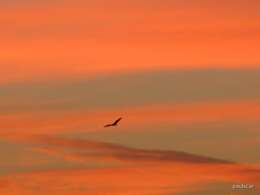 morning flight by paulscar