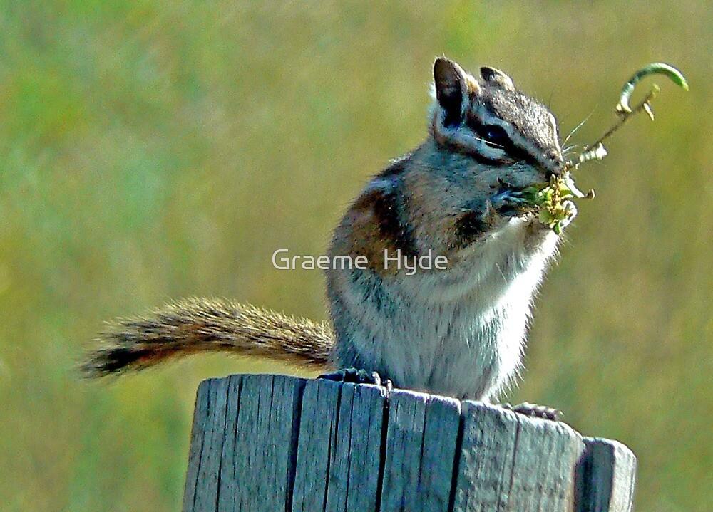 Chipmunk at Lunch by Graeme  Hyde