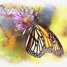 Butterfly Paint by JohnDSmith