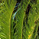 Sago Palm by Thaddeus Zajdowicz