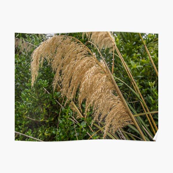 Native Grasses Poster