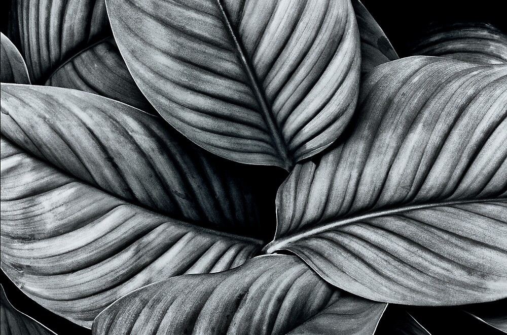 Leaves by Ganz