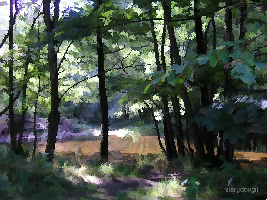 Forest Glade by hilarydougill