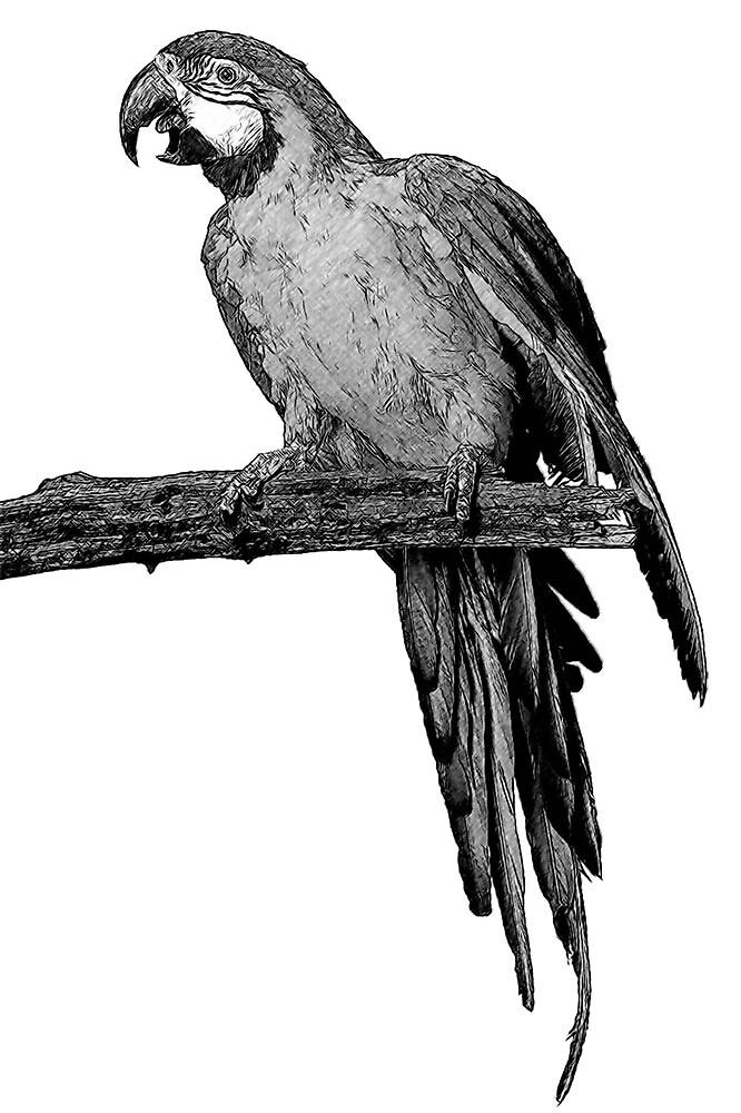 Parrot - Jurong Bird Park Singapore by Ganz