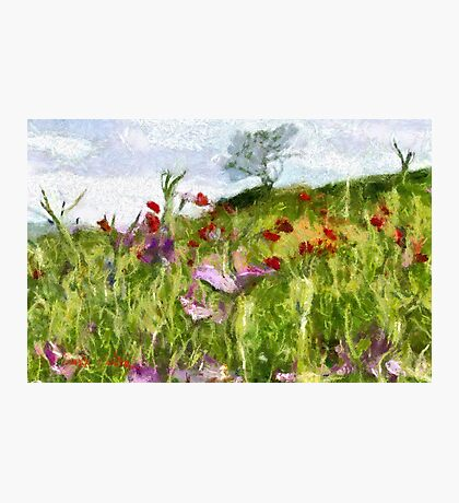A Meadow of Spring Flowers in Romania Photographic Print