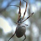 Arachnid 2 by Ben Loveday