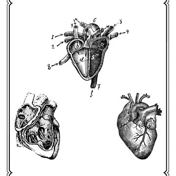 Vintage Heart Anatomy by StilleSkygger