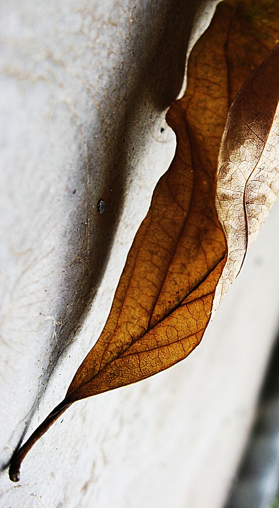 sinuous by grcc