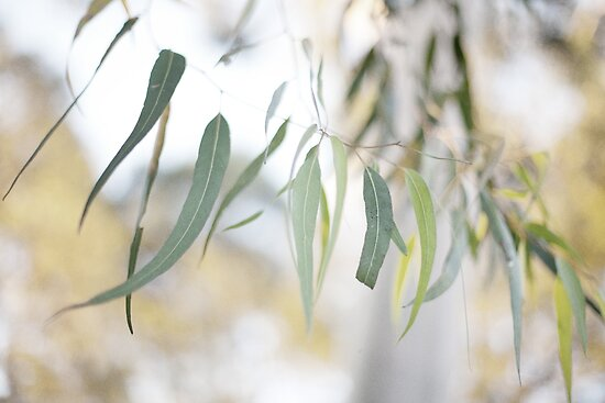 Gum Leaves by Kim Jackman