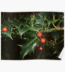 Holly Berry Poster