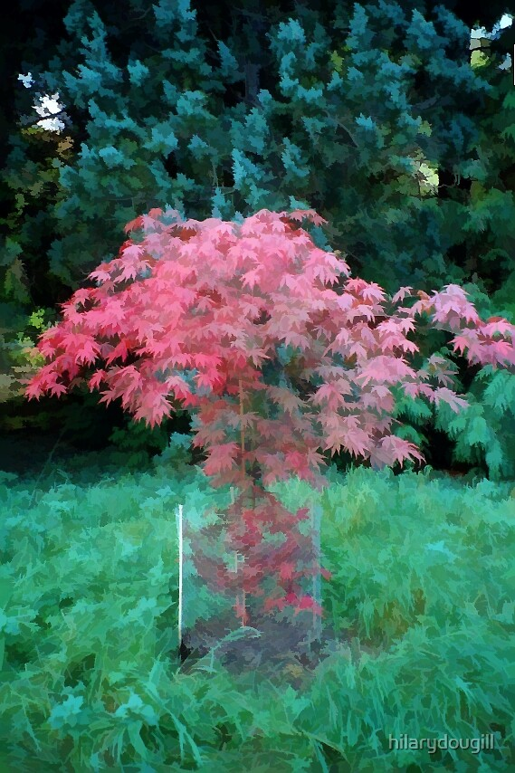 Little Red Tree by hilarydougill