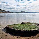 Back Beach - Lyme Regis by Susie Peek