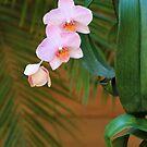 Lavender Dendrobium Orchids by Rosalie Scanlon