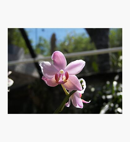 FLOWERS PRETTY IN PINK Photographic Print