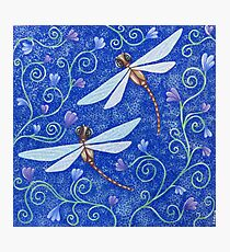 Pretty Dragonflies Photographic Print