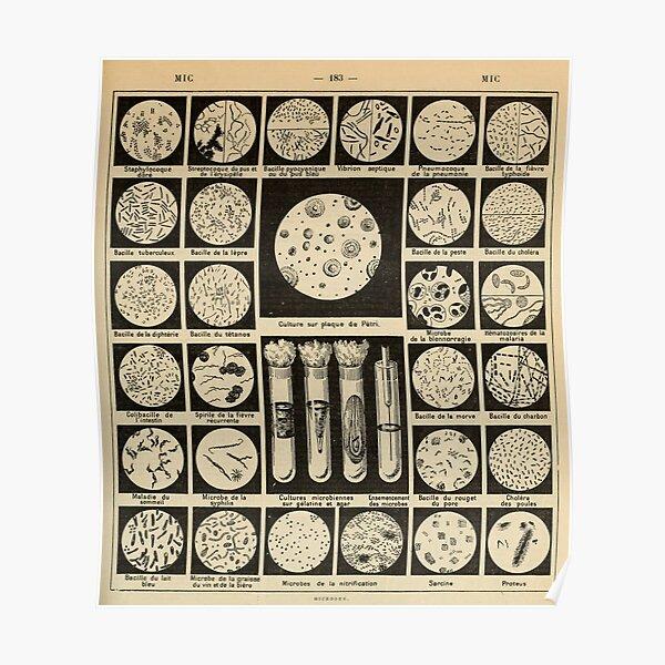 culture des bactéries vintage français science journal Poster