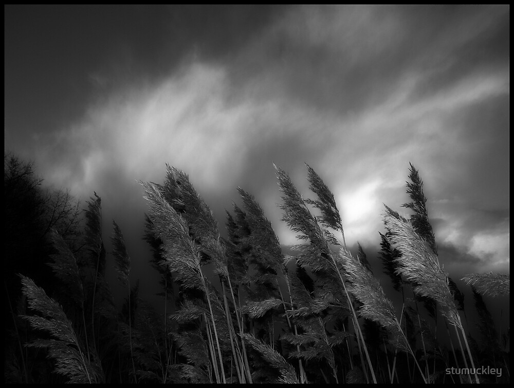 Among The Grasses by stumuckley