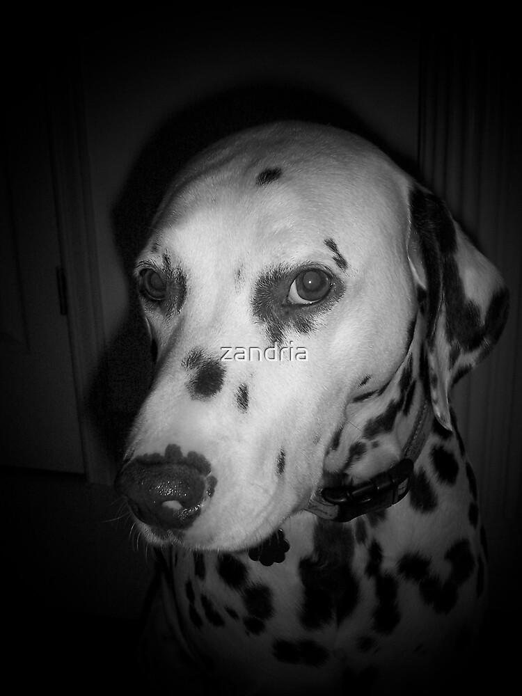 Hershey by zandria