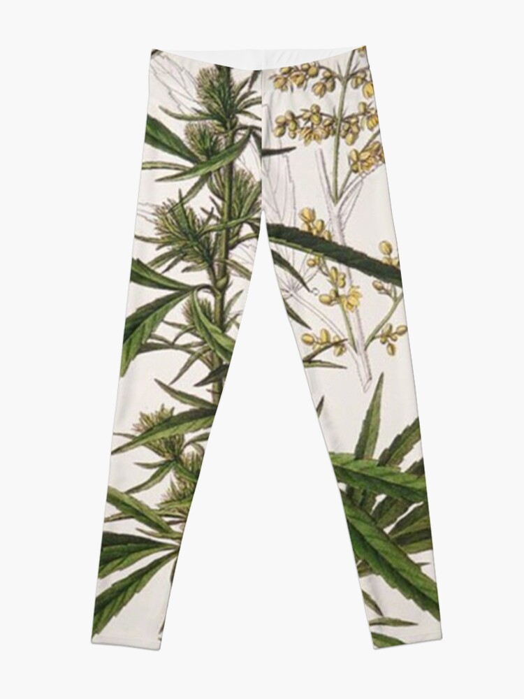 Alternate view of Cannabis Sativa - french botanical entry  Leggings