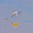 L'Oiseau Blanc by Jean-Luc Rollier