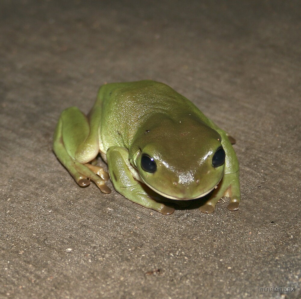 Another Frog. by minniemanx