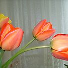 Tulips by Ana Belaj