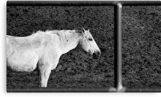 Hi-Yo Silver, away? by Daniel J. McCauley IV