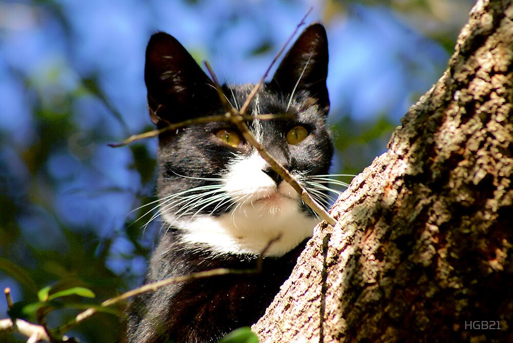 Kitty Cat by HGB21