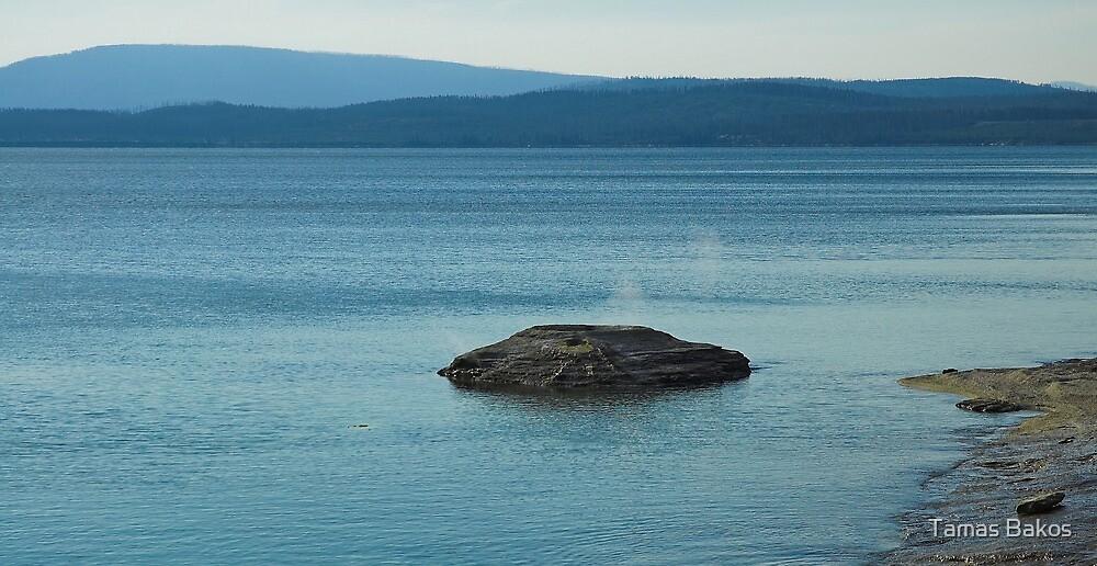 Fishing Cone by Tamas Bakos