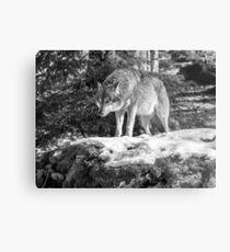 Timber Wolf Winter Menaces Metal Print
