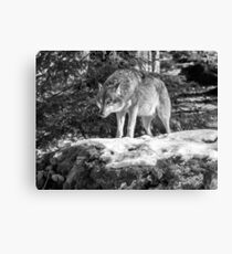 Timber Wolf Winter Menaces Canvas Print