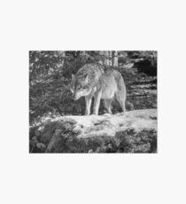 Timber Wolf Winter Menaces Art Board