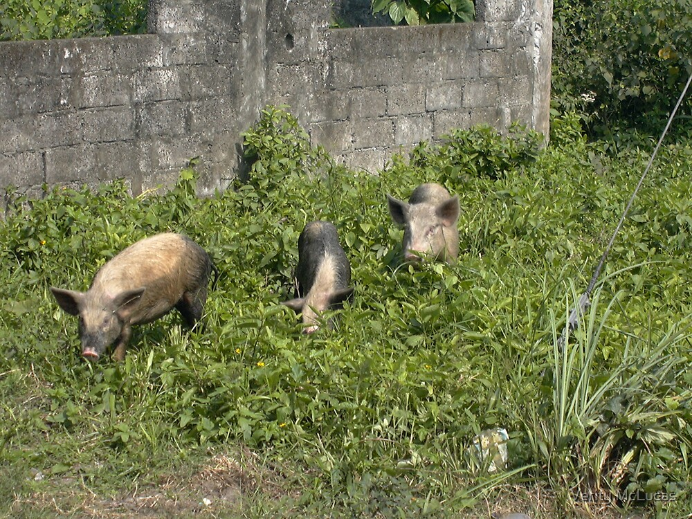 The Three Little Pigs by Verity McLucas