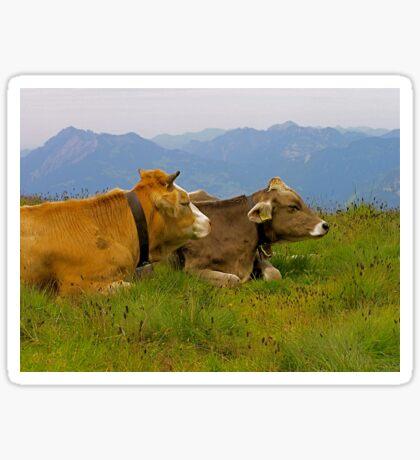 happy cows Sticker