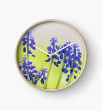Grape Hyacinth Clock