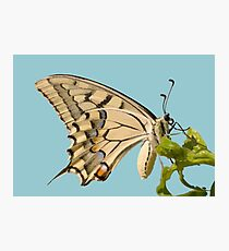 Swallowtail Butterfly Vector Isolated Photographic Print