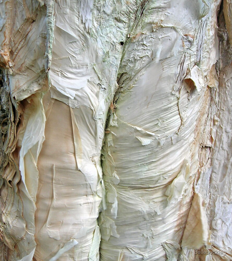 paper bark by bellebuckley
