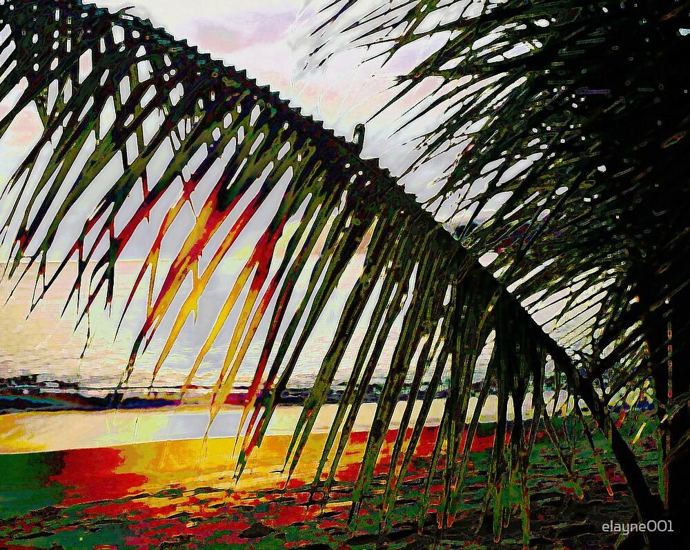 Palms at sunset by elayne001