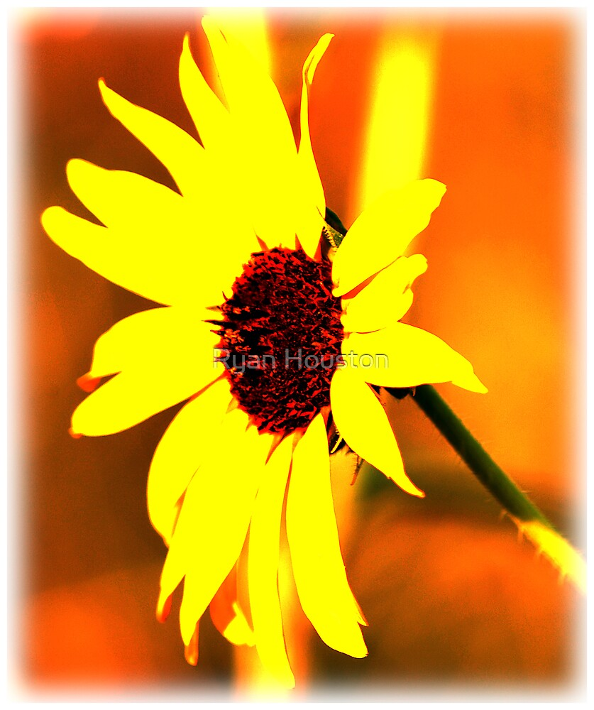 Sunshine by Ryan Houston