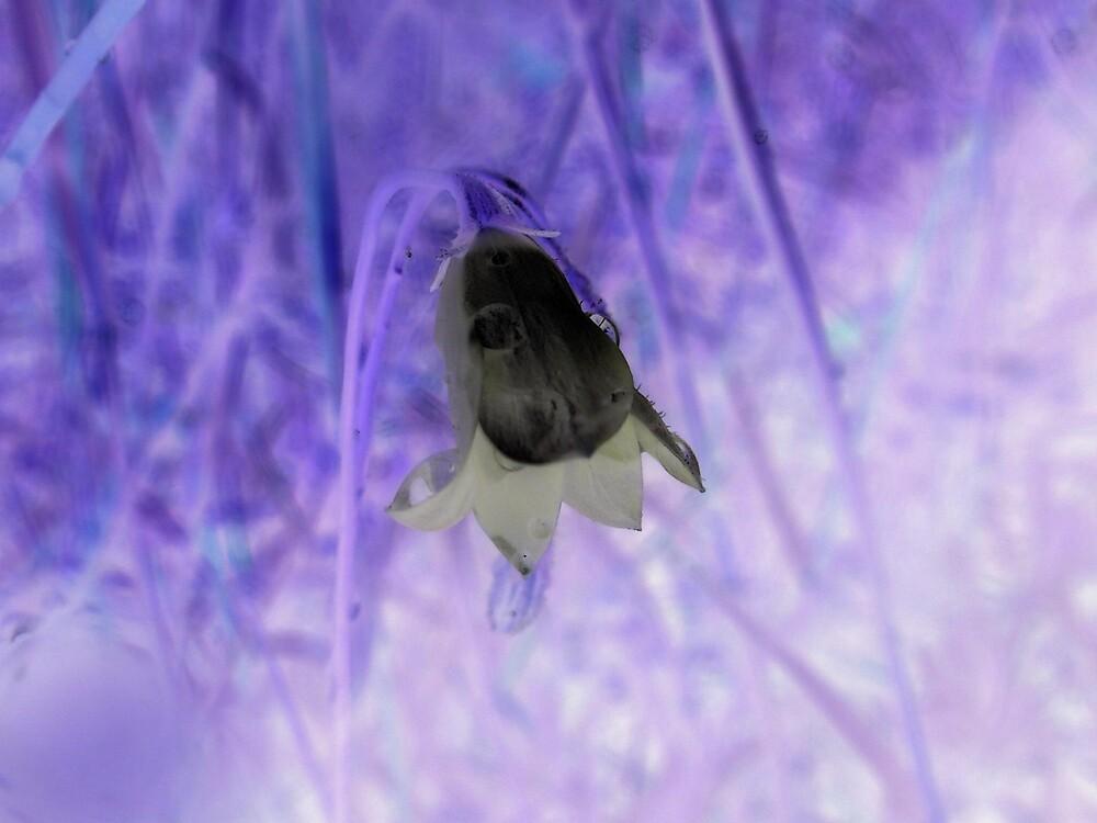 Purple Fantasy by Melissa Park